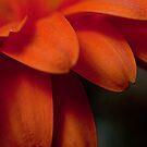 Petals by Brian Walter