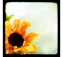 Sunflower II TTV  Photographic Print
