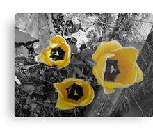 yellow tullip B&W Metal Print