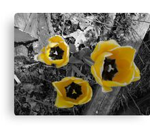 yellow tullip B&W Canvas Print
