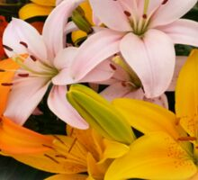 Spring Lilies ~ Ready for Planting Sticker