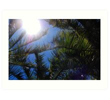 Up at the Sky - Hamilton Island, Whitsundays. Art Print