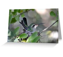 Mama Broadbilled  Greeting Card