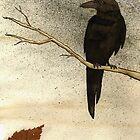Raven by Sturstein
