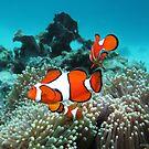 Clown Fish by chrisvsworld