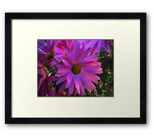 Multicolors Flowers. Framed Print