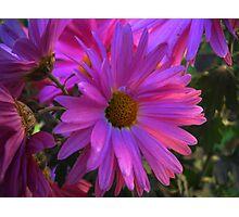 Multicolors Flowers. Photographic Print