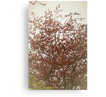 Up high above the tree top Canvas Print