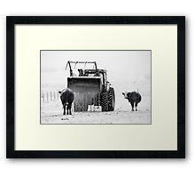 Feeding cows Framed Print