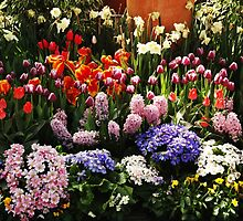 Array Of Spring Flowers by Kathleen Struckle