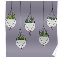 Hanging Succulents and Cacti Poster