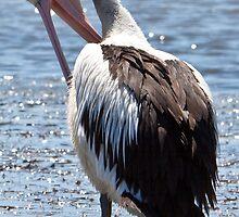 Pelican pruning itself by Jackie Hewett