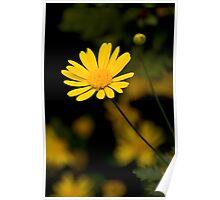Daisy - Yellow Poster