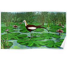 Pheasant Tailed Jacana Poster