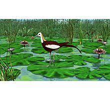 Pheasant Tailed Jacana Photographic Print
