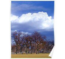 Washington Park Tree Sky layer Poster