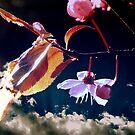 Spring by karolina