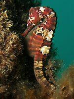 Marble Seahorse by Carolien Mermans
