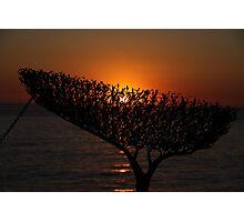Sunrise through Sculpture - Bondi Beach Photographic Print