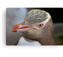 Adult Yellow-eyed Penguin Canvas Print