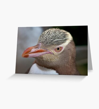Adult Yellow-eyed Penguin Greeting Card