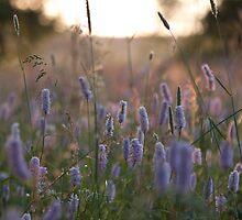 flower meadow by ChrisH77