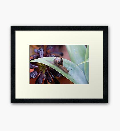 Snail Master Framed Print