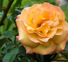 Early Summer Blooms Impressions - Elegant Peach Rose by Georgia Mizuleva
