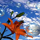 Lily In The Sky...With Bubbles by judygal