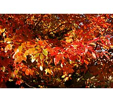 Autumn Leaves on Fire Photographic Print