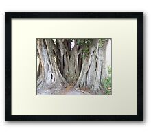 The Banyan Tree Framed Print