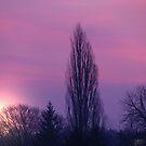 purple morning by Bibi03