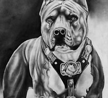 PITBULL 2 by rara25