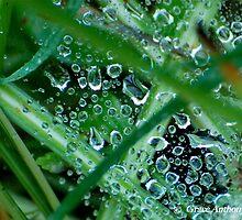 Spring Rain by GraceNotes