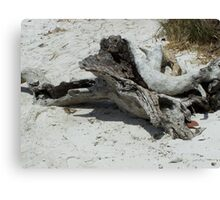 Drift Wood Canvas Print