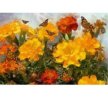 Marigolds and Butterflies Photographic Print