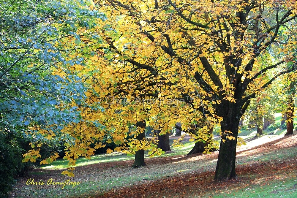 Autumn on Wombat Hill by Chris Armytage™