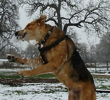 """Snowball Catching"" Sam by Catherine  Howell"