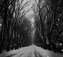 Winter Tree Tunnel by Shelly Harris