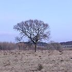 Single tree in February by Ian Coyle