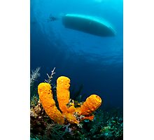 three sponge fingers and a boat Photographic Print
