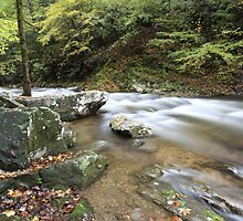 Laurel Creek  by kathy s gillentine