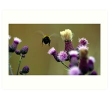 Flight of the bumble bee. Art Print