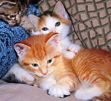 Three Little Kittens by Nadya Johnson