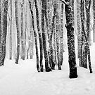 Trees in winter by patrick pichard