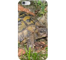 A Conversation with an Eastern Hermann's Tortoise iPhone Case/Skin