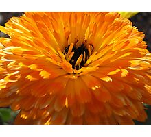 Shades of Orange Photographic Print