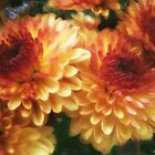 Brown and Gold Chysanthemums 1 by Christopher Johnson