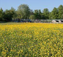 Water meadows at Mapledurham lock by Jim Hellier