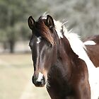 Horse by H & B Wildlife  Nature Photography
